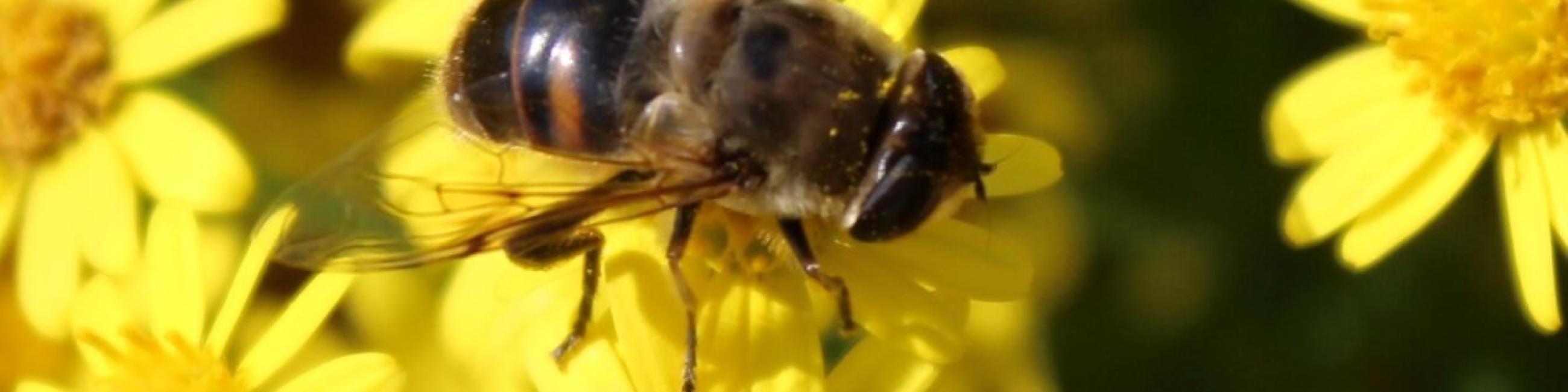 Bijenvriendelijke gemeente
